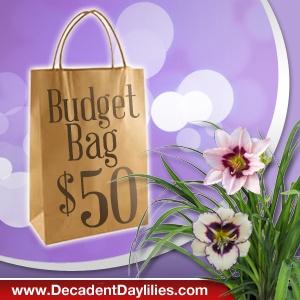 budget bag $50