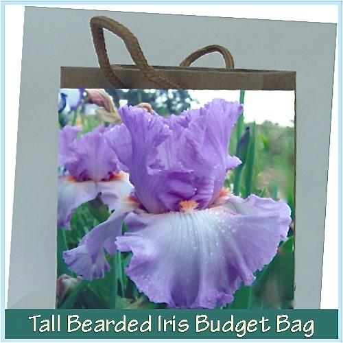 Iris Irises growing in my garden