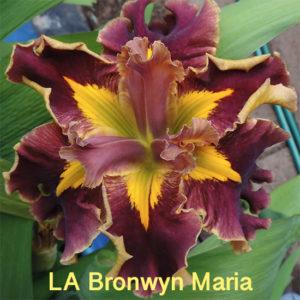 Beautiful Irises growing in my garden