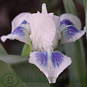 Iris Hi Sailor aqua and shades of blue